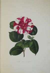 Illustrations and Descriptions of the Plants which Compose the Natural Order
