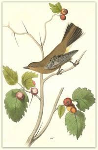 Pl. 69 Townsend\'s Ptilogonys (Female)  The Birds of America,
