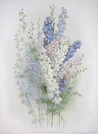 Carolina Larkspur.  Delphinium Carolinianum