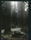 View Image 6 of 9 for Album of 132 Photographs showing Scenery from Western American National Parks, with Many Realphoto P... Inventory #List515
