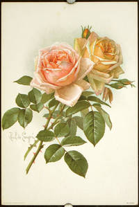 Chromolithograph of two roses