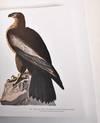 View Image 7 of 7 for The Audubon Society Baby Elephant Folio: Audubon's Birds of America Inventory #181383