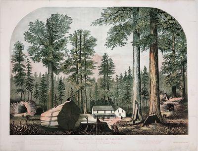 Mammoth Trees of California -...