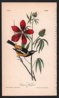 Common Troupial, Plate 499