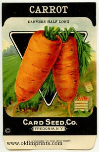 Carrot. (Danvers Half Long)
