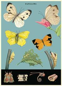 Cavallini & Co. Papillions Decorative Paper Sheet