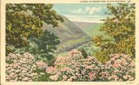 Laurel Blossom time in the Poconos 1939 used linen Postcard