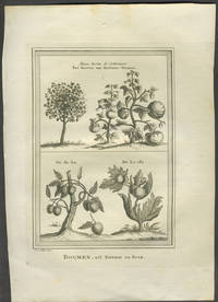 image of Boomen, uit Nieuhof en Boim. Copper engraving