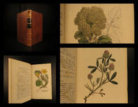 English botany, or, Coloured figures of British plants : with their essential characters, synonyms, and places of growth, vol iv
