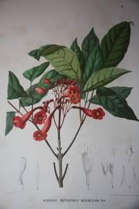 Botanische Ergebnisse der Reise Seiner Majestat des Kaisers von Mexico Maximililan I nach Brasilien (1859-60)