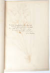 View Image 4 of 8 for State Normal Herbarium, a collection of botanical research, sketches, and samples Inventory #3956