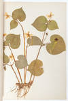 View Image 6 of 8 for State Normal Herbarium, a collection of botanical research, sketches, and samples Inventory #3956
