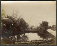 Botanic Gardens Sydney.  Albumen photograph