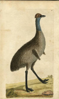 Emu, print from the Naturalist's Miscellany by George Shaw