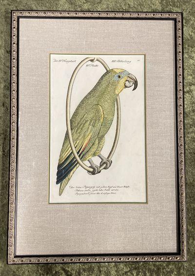 , . Fine. Frisch (Artist), Johann L.. Bird Engraving. Hand-colored Parrot. Plate 47. Papagey. Psitta...