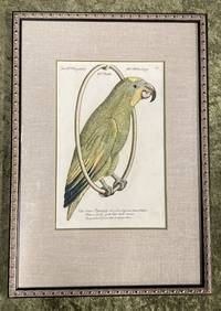 Bird Engraving. Hand-colored Parrot. Plate 47. Papagey. Psittacus viridis capite luteo fronte coeruleo