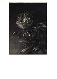 Pomegranate. Mezzotints by Judith Rothchild by  Ruth Editions de l'eau. Fainlight - Hardcover - Signed - 1997 - from Priscilla Juvelis, Inc. (SKU: 8192)