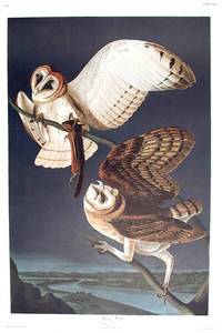 Barn Owl. From The Birds of America (Amsterdam Edition)