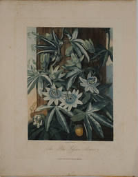 The Blue Passion Flower.  Mezzotint by  Dr. Robert John Thornton - 1811 - from Antipodean Books, Maps & Prints and Biblio.com