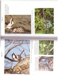 image of BIRDS OF RUSSIA.. .