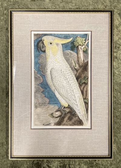 , . Fine. Frisch (Artist), Johann L.. Bird Engraving. Hand-colored Parrot/Cockatoo Plate 50. Papagey...