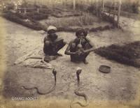 Albumen Print of Snake Charmers in Ceylon (Sri Lanka)