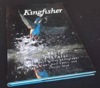 Kingfisher - Unique action photographs of our most exotic and elusive bird