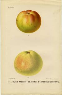 31. Julien Precoce. 32. Pomme d'Automne de Cludius
