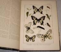 British and European Butterflies and Moths (Macrolepidoptera).