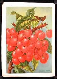 Bon Bon Cherry