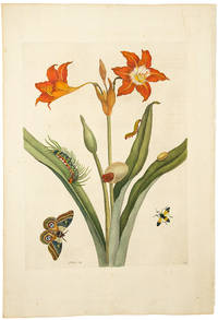 [Red Lily with Moth]