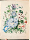 View Image 6 of 11 for The Ladies' Flower Garden of Ornamental Annuals Inventory #3471
