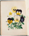 View Image 8 of 11 for The Ladies' Flower Garden of Ornamental Annuals Inventory #3471