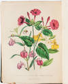 View Image 9 of 11 for The Ladies' Flower Garden of Ornamental Annuals Inventory #3471