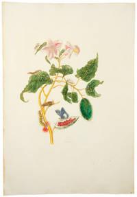 [Pink Flowered Rocu]