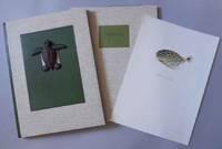 Cheloniidae. Sea Turtles