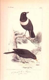 Histoire Naturelle Des Oiseaux D'Europe - Passereaux.