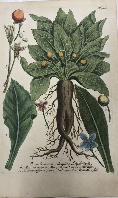Regensburg: H. Lentz and H.G. Neubauer. unbound. Botanical. Color mezzotint with hand coloring. Page...
