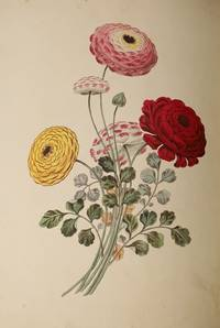 Group of Flowers, Groups of Fruit, Six Birds (Three works By Brookshaw bound as one) Full titles:  1. Groups of Flowers, Drawn and Accurately Coloured after Nature, with Full Directions for the Young Artist; Designed as a Companion to the Treatise on Flower Painting. 2.  Groups of Fruit, Accurately Drawn and Coloured after Nature, With Fu