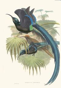 THE BIRDS OF NEW GUINEA and the Adjacent Papuan Islands, including Many New Species Recently Discovered in Australia. Volume I. [one] (Birds of Paradise)