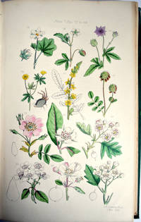 The useful plants of Great Britain: a treatise upon the principal native vegetables capable of application as food, medicine, or in the arts and manufactures by C Pierpoint Johnson - Hardcover - from E C Books and Biblio.com