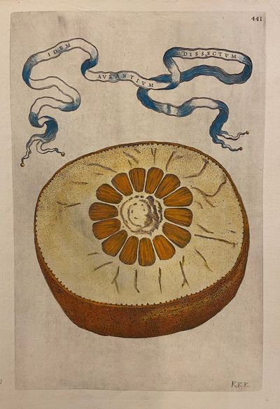 Rome: Herman Scheus, 1646. Engraving with hand coloring. Plate 441. Image measures 12 X 8 inches. Di...