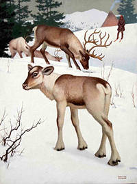 Reindeer and a Snowy landscape with a Man on skis by  Edward  (1900-1981) Osmond - Signed - from Alan Wofsy Fine Arts (SKU: 16-3147)