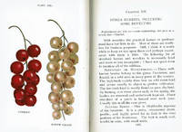 image of BIGGLE BERRY BOOK: Small Fruit Facts from Bud to Box Conserved into Understandable Form.