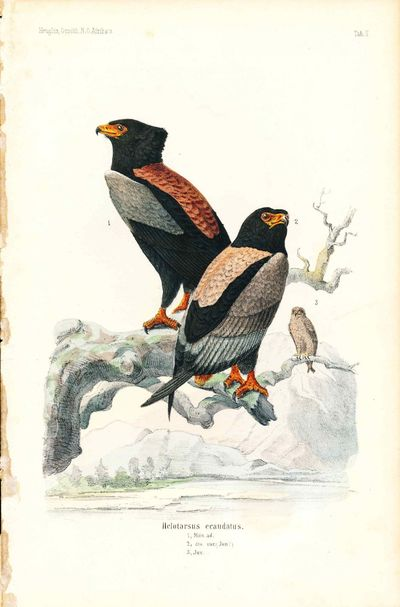 Cassel: T. Fischer, 1874. Very Good. Chromolithograph. Minor foxing. Minor browning to edges. Size: ...