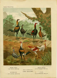Mr. W.F. Entwisle's Game Bantams. Brown Reds. First Prize at Leeds 1886. Black Reds. Cup at Windsor 1886 &c. Duckwings. Cup at Windsor 1885, &c. Piles. Cup at Birmingham 1885, &c by CASSELL'S CHROMOLITHOGRAPHS) -  1890. - from oldimprints.com and Biblio.com