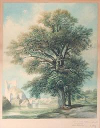 Watercolor of Ruin in background and Trees in foreground. Inscribed 'seinem lieben Gerhard zur frenndt Erinnerunng Berlin 26 Sept. 1875
