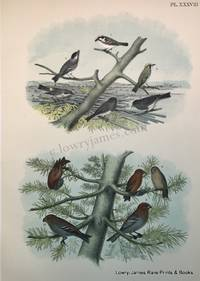 Plate XXXVIII  The Chestnut-sided Warbler, The Black-polled Warbler, The Yellow-rumped Warbler, The Snow-bird, The Red or American Cross-bill, The Pine Grosbeak