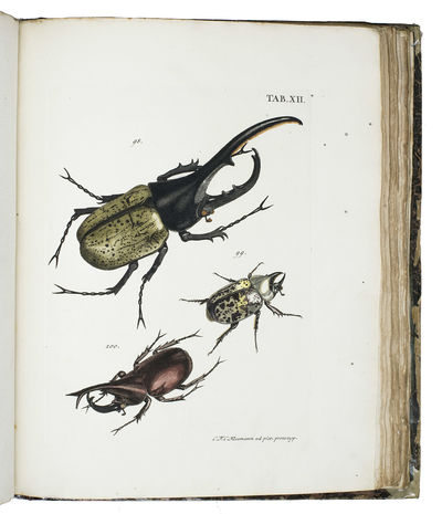 Catalogus systematicus coleopterorum....
