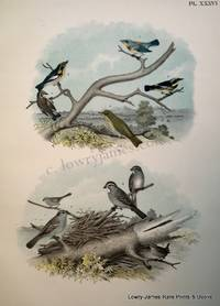 Plate XXXVI The Blue Yellow-backed Warbler, The Black and Yellow Warbler, The Blackburnian Warbler, The Hermit Thrush, The White-throated Sparrow or Peabody-bird, The White-crowned Sparrow, The Winter Wren